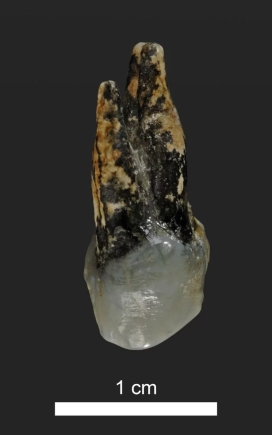 graeco tooth